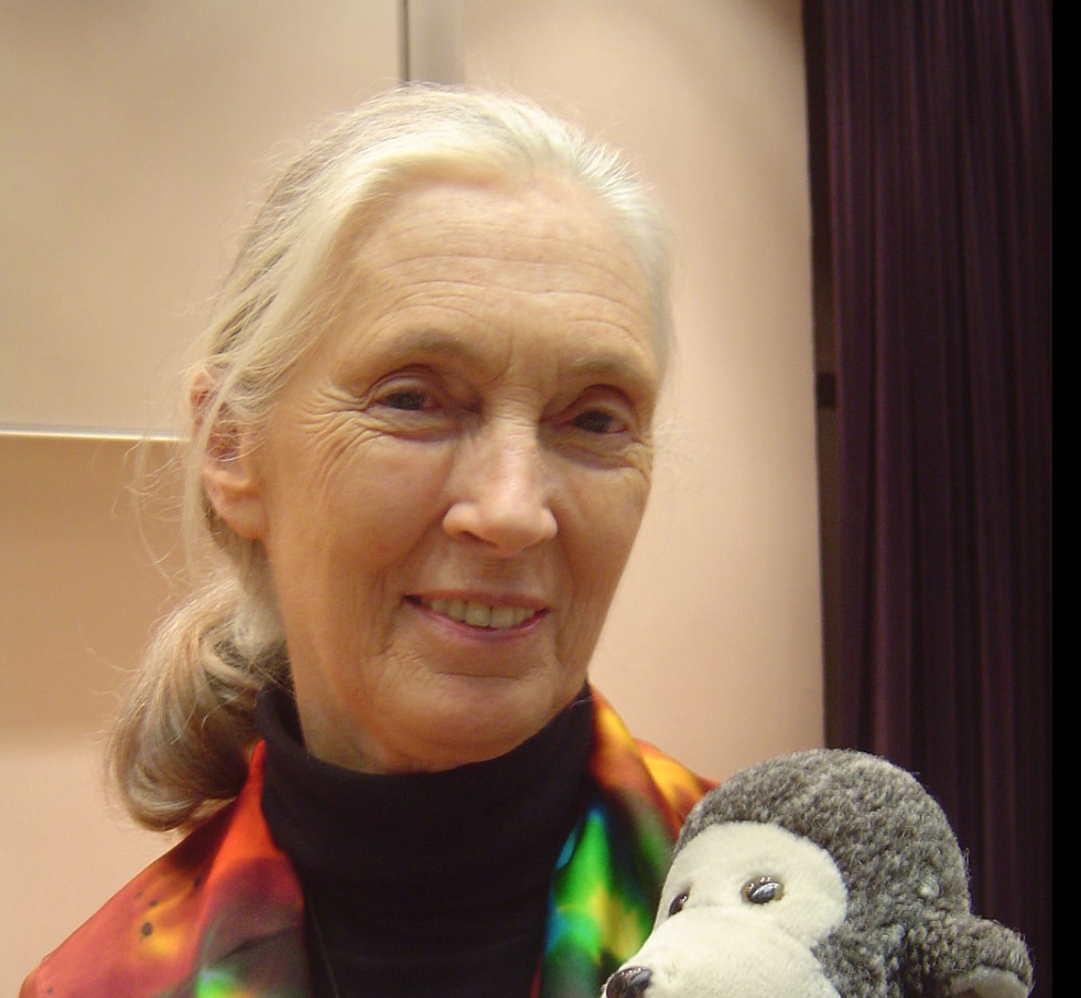 Jane Goodall Photo